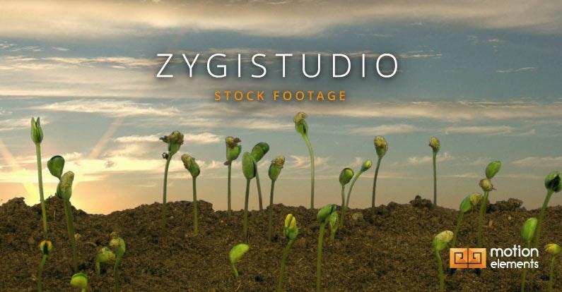 Featured Artist: zygistudio