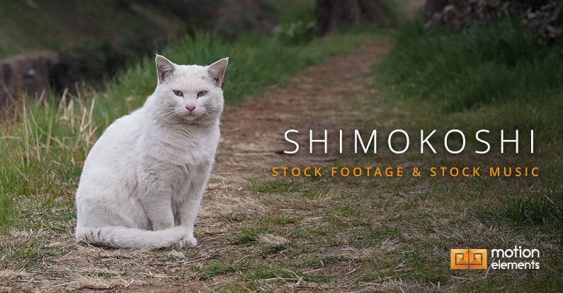 Featured Artist: shimokoshi